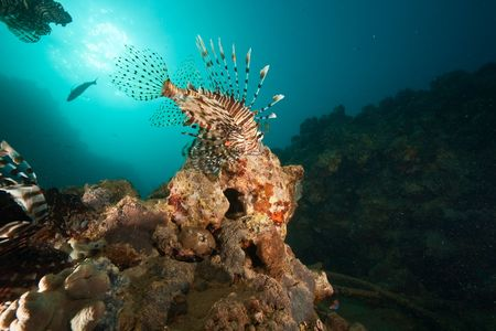ocean, coral, sun and lionfish photo
