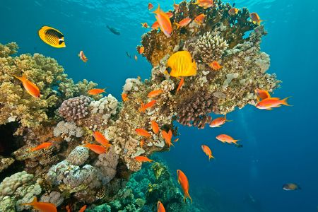 softcoral: coral and fish around Shaab Mahmud