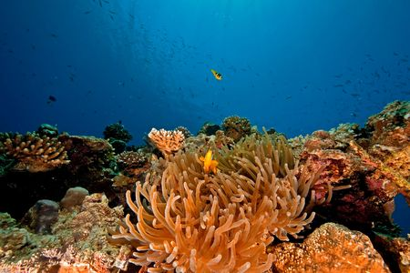 ocean and anemone photo