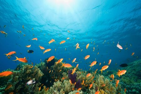 softcoral: ocean, coral and fish