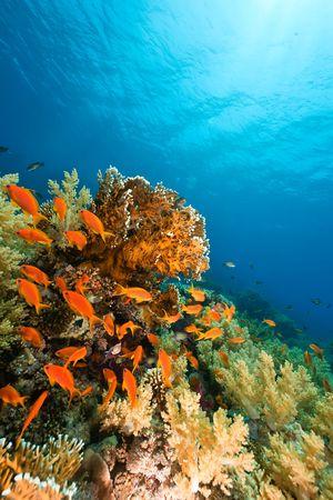 海、サンゴと魚 写真素材