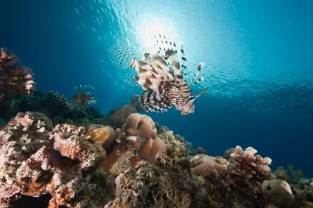 ocean, sun and lionfish photo