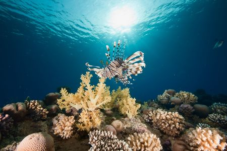 ocean, sun and lionfish photo