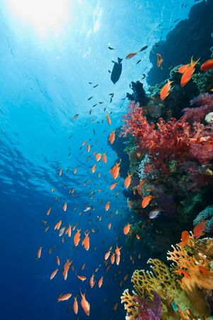 coral and fish Banque d'images