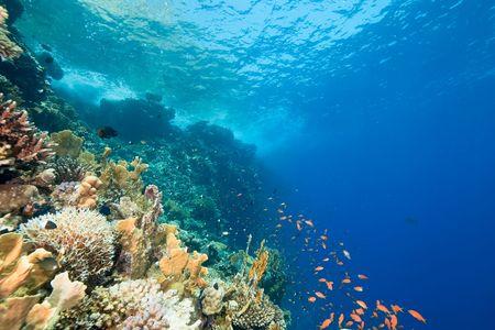nurkować: oceanu, ryby i rafy Zdjęcie Seryjne