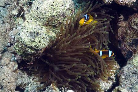 magnificent: magnificent anemone