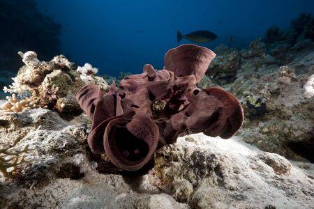 prickly: prickly tube-sponge Stock Photo