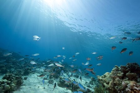 coral ocean: ocean and fish Stock Photo