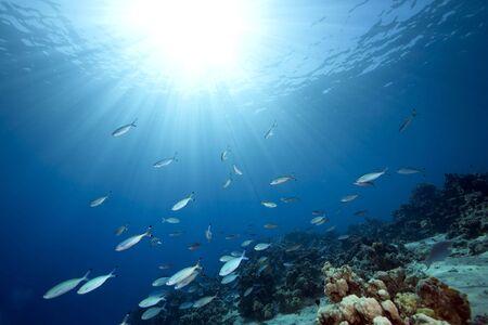 ocean and fish Stock Photo - 5872951