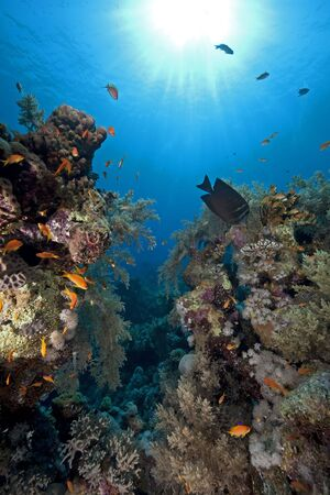 under water: coral and fish Stock Photo