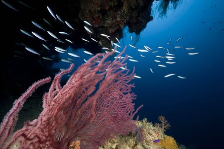 under the surface: Ocean,fish and coral Stock Photo