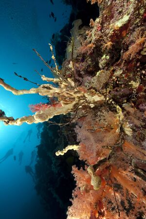 divers, ocean and coral Stock Photo - 6315136
