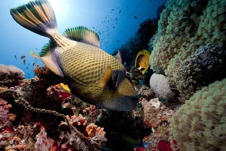 titan triggerfish,ocean and sun Stock Photo - 6315563
