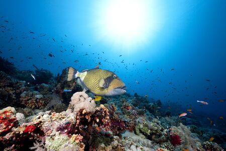 titan triggerfish,ocean and sun Stock Photo - 6315462