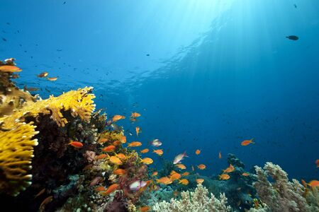 ocean, coral and fish Stock Photo - 6315447