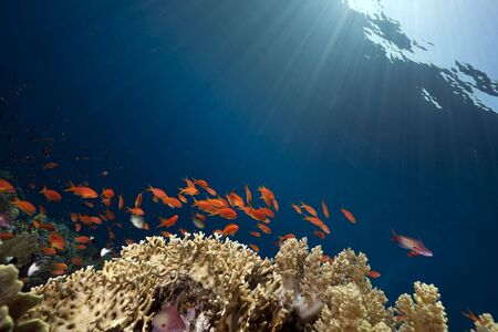 ocean, coral and fish Stock Photo - 6315360