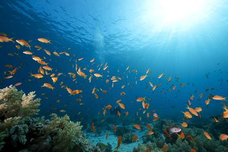 ocean, coral and fish taken in the Red Sea Banque d'images
