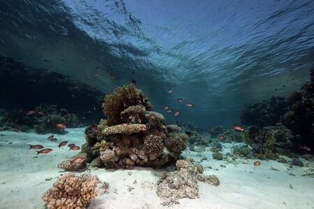 Ocean, coral and fish taken in the Red Sea. photo