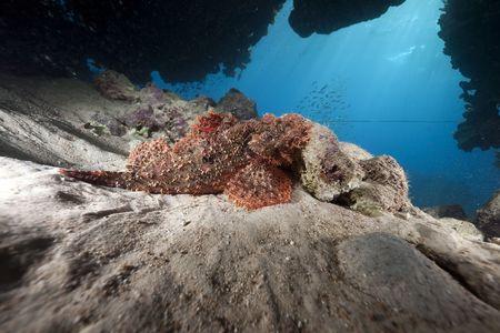scorpionfish: scorpionfish and ocean