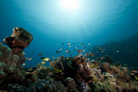 fish and ocean photo