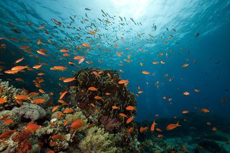 soft corals: underwater scenery at Yolanda reef Stock Photo