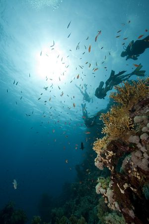 divers, coral and fish photo