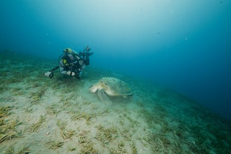 green turtle and an underwater photographer taken in the Red Sea. photo