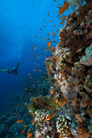hard coral: Fish, coral and ocean Stock Photo