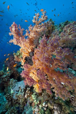 Fish, coral and ocean photo