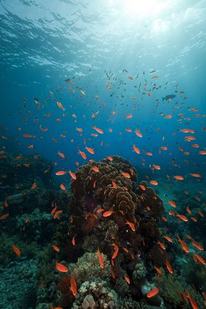 Coral and fish in the Red Sea. Stock Photo - 8124942