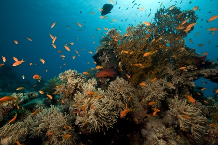ocean, coral and fish photo