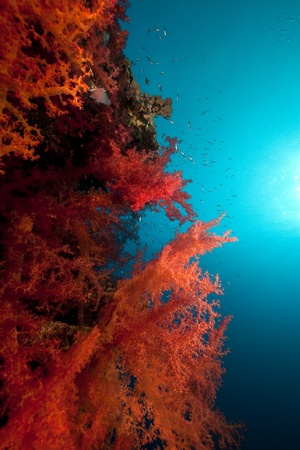 sunspot: soft coral and ocean