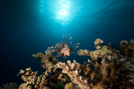sunspot: lionfish and ocean.