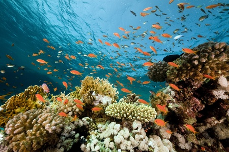 Fish. coral and ocean. photo