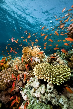 coral reef underwater: Fish. coral and ocean. Stock Photo