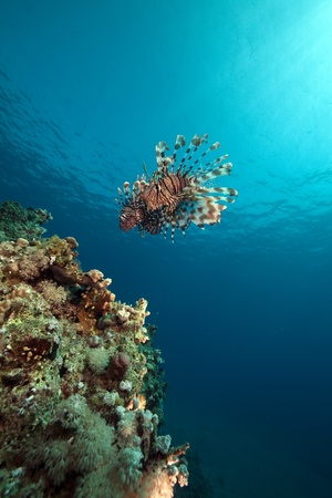 lionfish and ocean. Stock Photo - 8482535