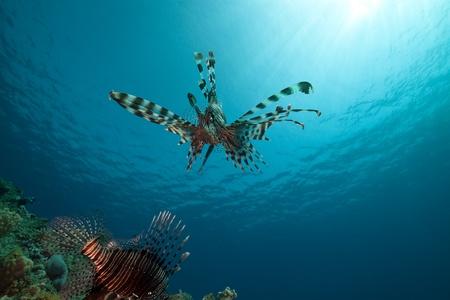 sunspot: lionfish and ocean.