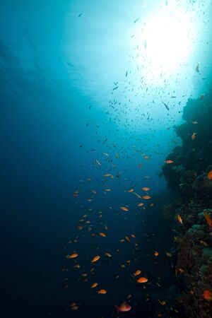 under water: Tropical reef and marine life in the Red Sea. Stock Photo