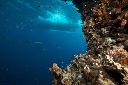 Tropical reef and marine life in the Red Sea. photo