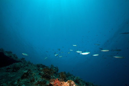 The Dunraven wreck and marine life in the Red Sea. Stock Photo - 8580815