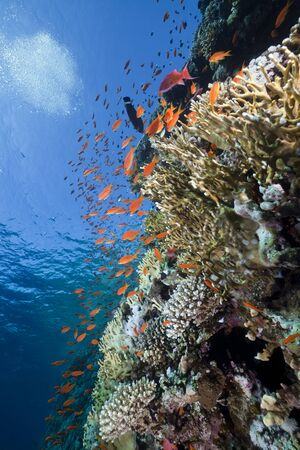 Marine life in the Red Sea. Banque d'images