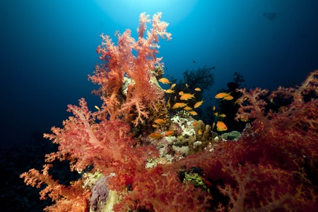 Tropical underwater life in the Red Sea. Stock Photo - 8638029