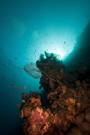 sea fan: Sea fan, coral and fish in the Red Sea. Stock Photo