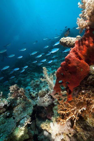 Underwater scenery in the Red Sea. photo