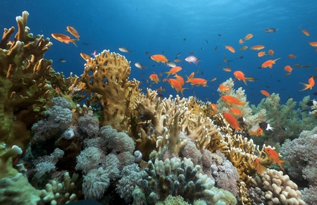 Tropical underwater life in the Red Sea. Banque d'images