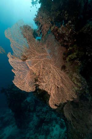 Tropical underwater life in the Red Sea. Stock fotó