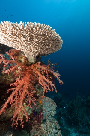 sunspot: Coral reef in the Red Sea
