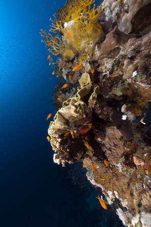 Triopical underwater world in the Red Sea photo