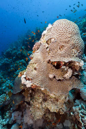 Fish and tropical reef in the Red Sea. Stock Photo - 17579657