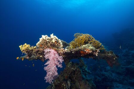 beneath the surface: Table coral in the Red Sea